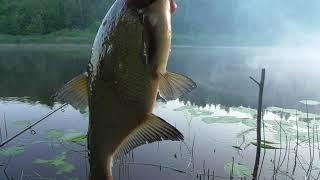 Рыбалка на луге и ее притоках