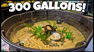 EASY Fish Pond Setup For Native Fish!