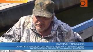 Сроки запрета рыбной ловли в самарской области