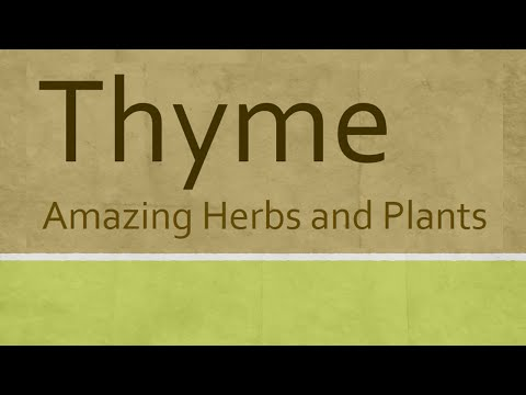 Video Amazing Benefits of Thyme herb - Health benefits of thyme herb - Thyme Herb and Plants