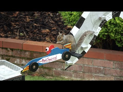A British guy builds a Formula 1 themed obstacle course for the squirrels in his garden
