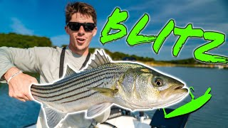 Stalking SHALLOW Water Bass in Saltwater PONDS (Striper Madness)