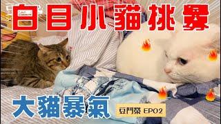 【豆鬥榮 EP02】這隻貓哪一天真的會被揍扁的(?