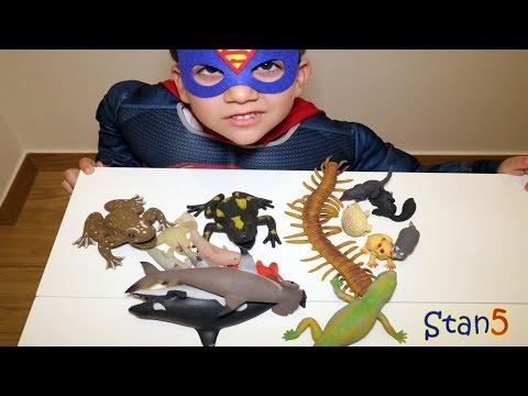 Come trattare vermi al bambino di 5 anni