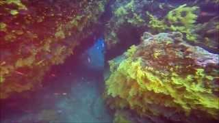 Dykning Ved Kadavu - Fiji