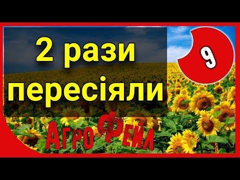 Пересев подсолнечника + Аминопиралид. АгроФейл 9