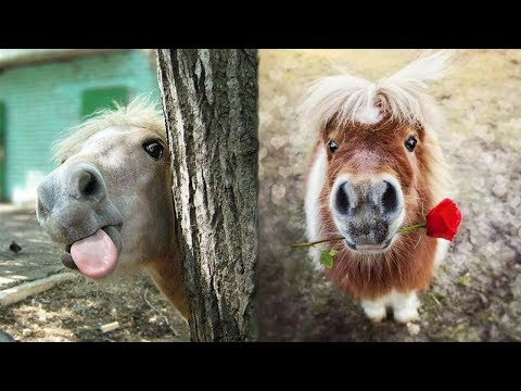 Adorable and Hilarious - Cute Horse Video Compilation