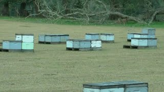 Florida Bee Keepers: 'Fewer bees could spell higher prices for food'