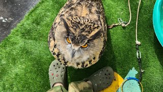 A resenting, flowery owl