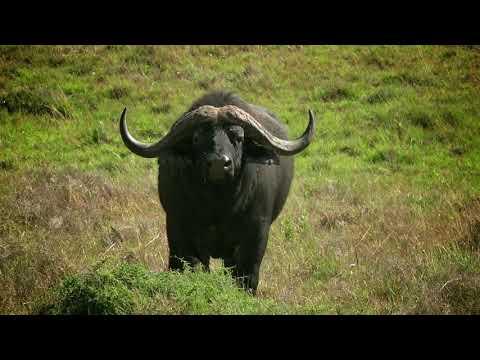 HillsNek Safari Camp, Amakhala Game Reserve