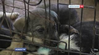 Обитателям Фонда помощи животным нужна наша помощь