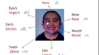 German Language Learn Fast-Vocabulary with Photo/Urdu جسم ...