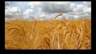 Abib (Nisan) - The Jewish Month of Abib (Nisan)