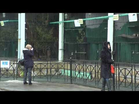 Детенышей ягуара в Ленинградском зоопарке назвали Тито и Атау