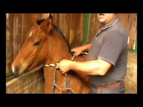 Lattivatore di cavallo per uomini il prezzo dove comprare
