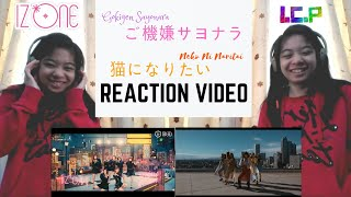 IZ*ONE Gokigen Sayonara & Neko Ni Naritai Reaction Video