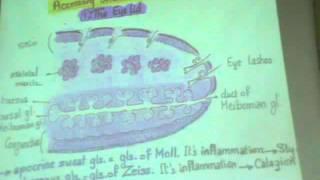 "Dr Gihan -eye3 & ear1 part 1 "" Eye lid / lacrimal apparatus / External & Middle Ear """