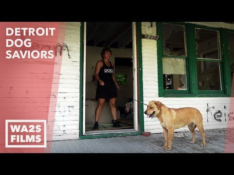 Stray Dog Acting Weird Rescues A Gorgeous Female! Detroit Dog Saviors - Howl & Hope For DoDo Dogs