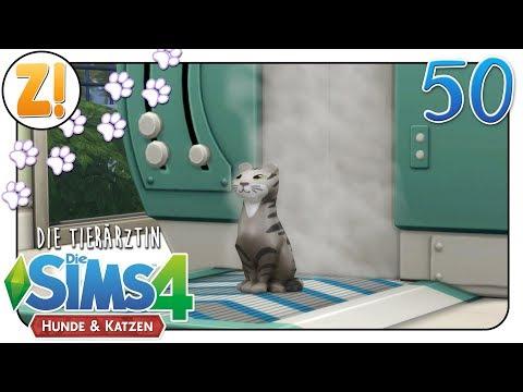 Sims 4 [Dr. Smith & die Tiere]: Eine kranke Plüschkatze? #50 | Let's Play [DEUTSCH]