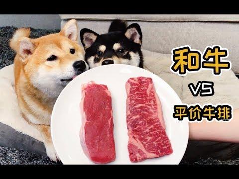 實測狗狗到底會挑貴的和牛還是便宜牛排呢!?