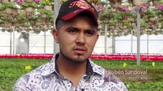 Especiales Noticias - Trabajadores agrícolas temporales, la otra cara de la migración