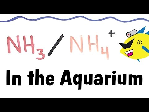 Ammonia and Ammonium in the Aquarium