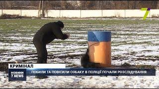 Побили та повісили собаку: в поліції Одеси почали розслідування