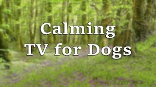 Calming TV for Dogs - Bluebell Meadow