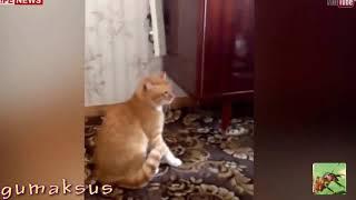 топ 3 когда не надо злить кота