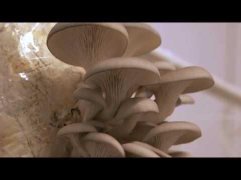 Costo lamizit da un fungo di unghie