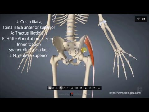 Weit verbreitet Osteochondrose 2-3 Grad