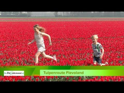 Tulpenroute wordt op 13 april geopend en heeft als thema 'Gouden Eeuw'