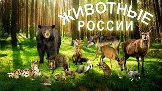 Животные России и детёныши. Развивающее видео. Познаём Мир.