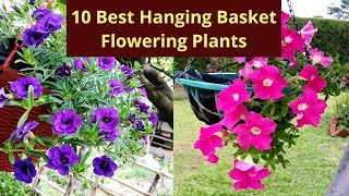 10 Best Hanging Basket Flowering Plants 🌱Top 10 Plants 🌱