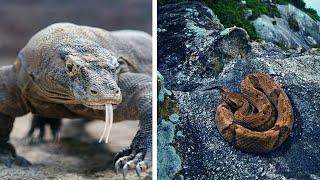 10 ადგილი სადაც ცხოველები ბატონობენ