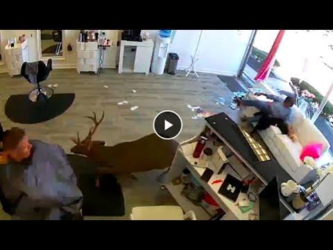 Deer jumps through window of Long Island hair salon