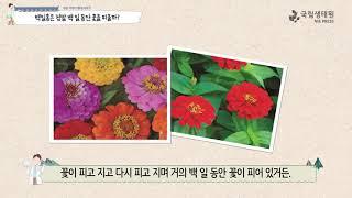[국립생태원]02 슬픈 그리움의 꽃 백일홍