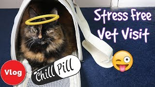 5 Tips on Taking Your Cat to the Vet! How To Make a Vet's Visit Fear Free For You and Your Cat!