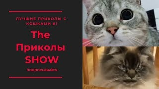 Лучшие приколы с кошками #1 ● The Приколы SHOW