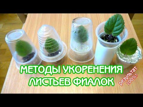 Альтернативные методы укоренения листьев фиалок