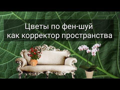 Игорь счастье песня