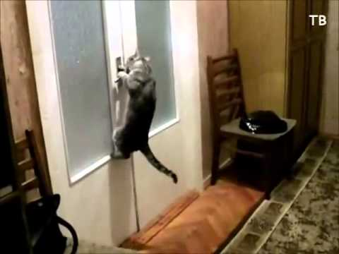 Terrific !!!  how he opened the door. Clever cat / Müthiş . Akıllı kedi.