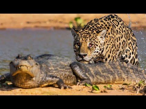 10 Animales Letales De Sudamérica