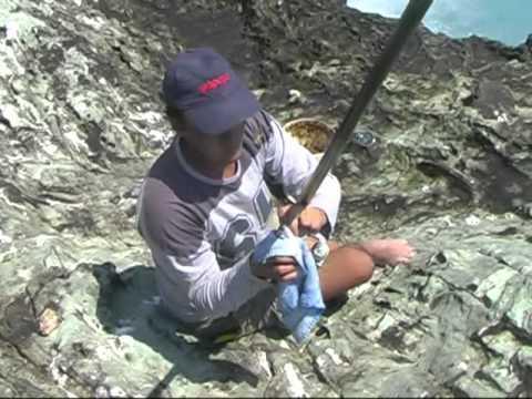 Ψάρεμα μπολονέζ στα βράχια