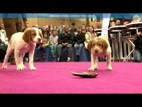Voir la vidéo : Ring Canins du 04 mars 2017, partie 2