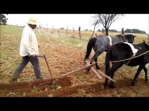 Modernizacion de la agricultura tradicional en Teul de Gonzalez Ortega, Zacatecas