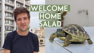 we brought our pet tortoise home in Malta