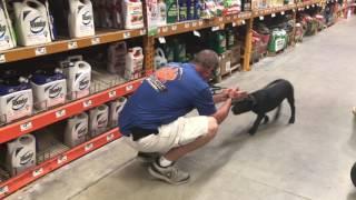 """Presa Canario """"Gypsy"""" l Amazing Transformation l San Antonio Dog Trainers"""