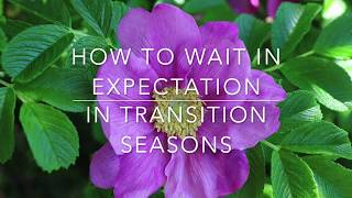 How to Wait Expectantly in Transition Seasons/A Word of Encouragement/ Ruth Camlin Teaching/