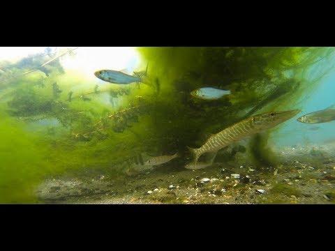 Una mattina sott'acqua nel Ticino